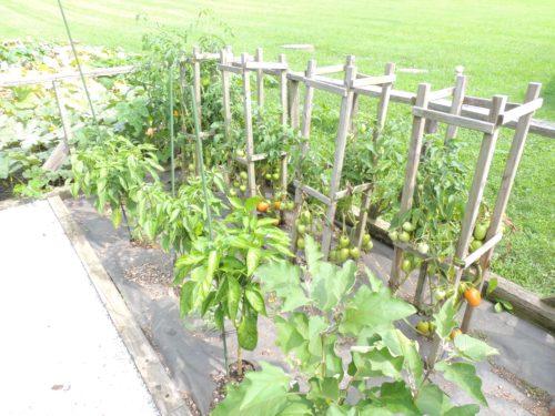 Tomato Plants | manningthewall.com
